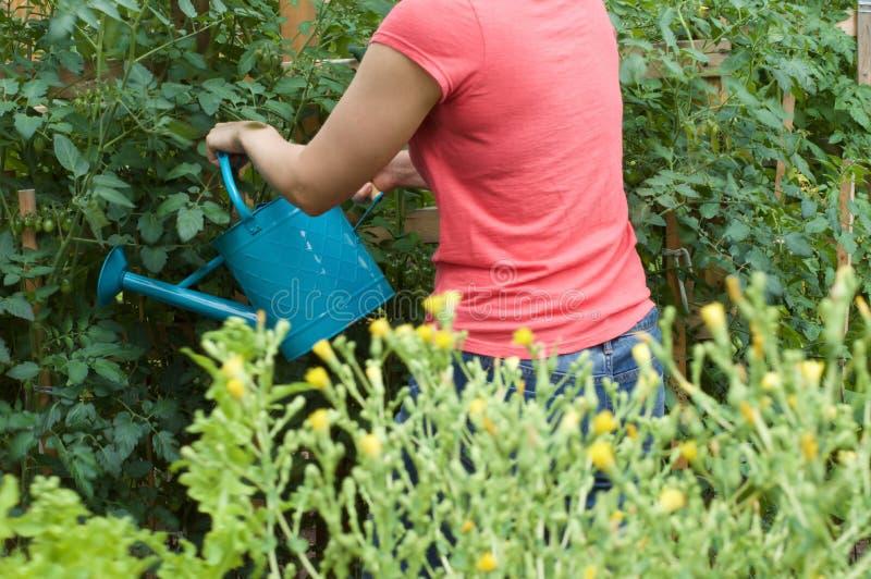 Ung kvinna som bevattnar grönsakträdgården royaltyfri foto