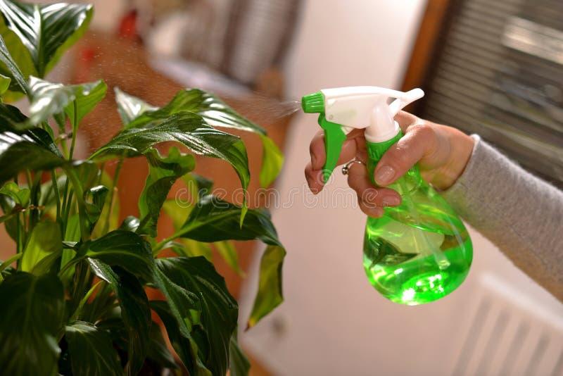 Ung kvinna som bevattnar houseplants arkivbild
