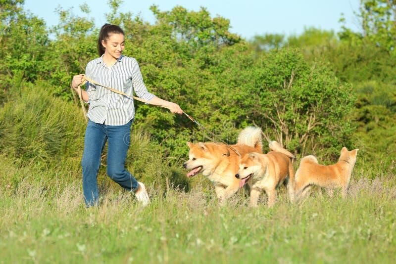 Ung kvinna som går hennes förtjusande Akita Inu hundkapplöpning royaltyfri fotografi