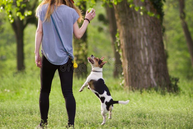 Ung kvinna som går med en banhoppninghund som spelar utbildning royaltyfri bild
