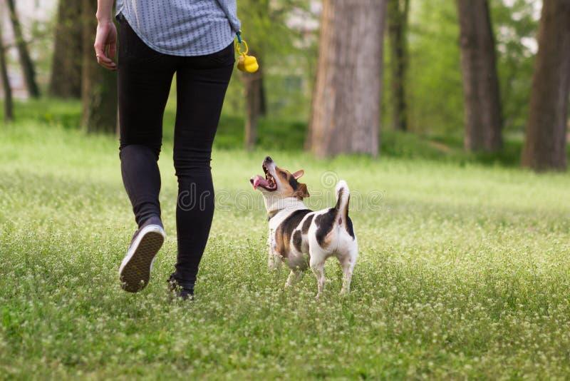 Ung kvinna som går med en hund som spelar utbildning arkivfoton