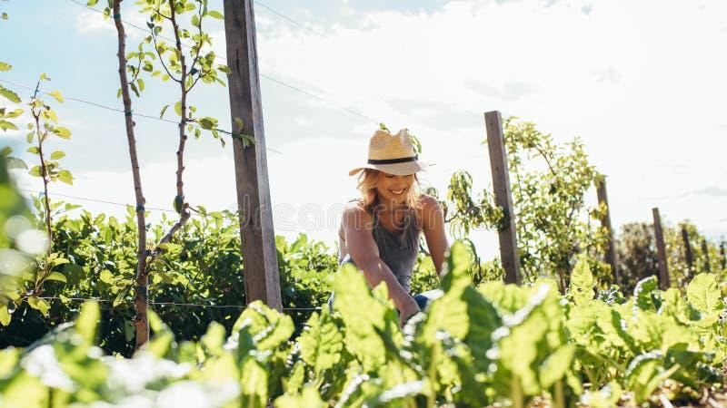 Ung kvinna som gör lantbruk royaltyfri foto