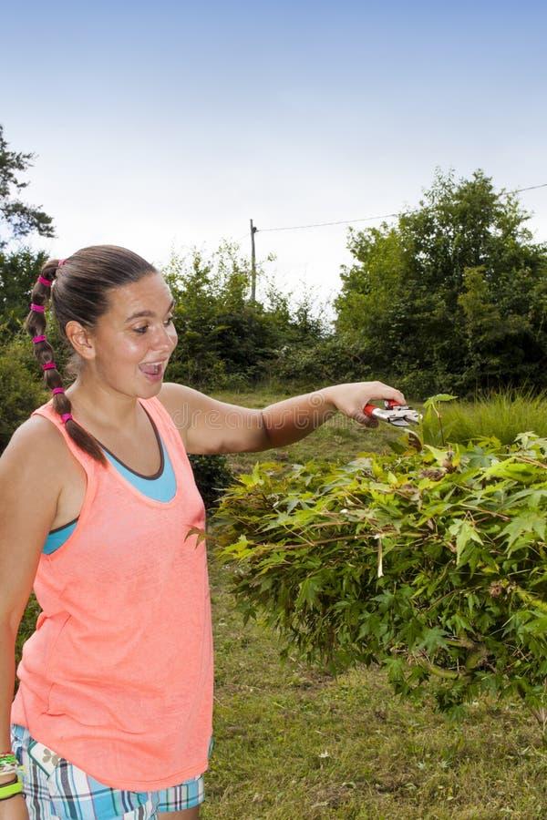 Ung kvinna som klipper och beskär lönnträdet (den Acer laurinumen) arkivbilder