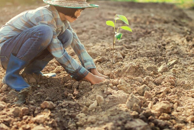 ung kvinna som planterar trädet i trädgård begreppseco royaltyfri fotografi