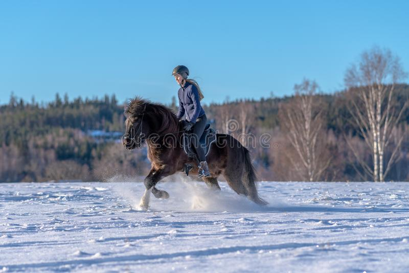 Ung kvinna som rider hennes isländska häst i djup snö och solljus royaltyfria foton