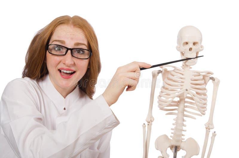 Ung kvinnlig doktor med skelettet som isoleras på royaltyfria foton