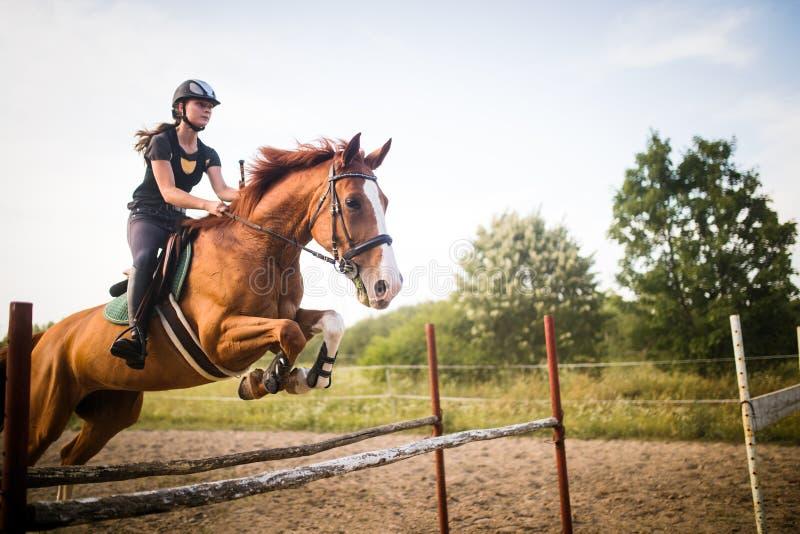 Ung kvinnlig jockey på hästen som hoppar över häck arkivfoto