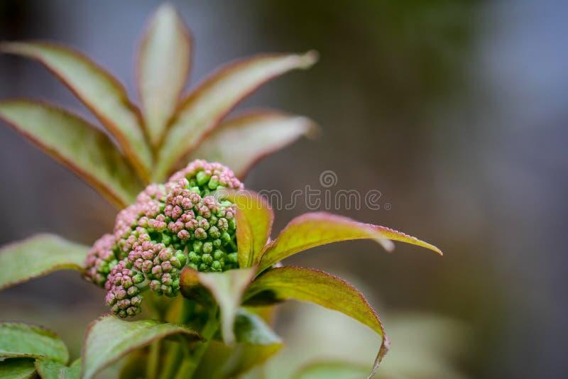Ung lila blomma i vårtid royaltyfria bilder