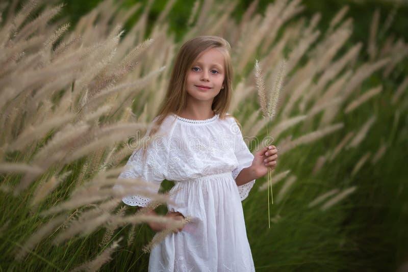 Ung liten flicka med långt hår, ensamt gå för vit klänning i fält och samla blommor för en bukett liten flicka med a royaltyfria foton