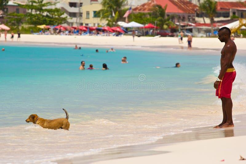 Ung man och en hundsimning i havet som är karibiskt royaltyfri bild