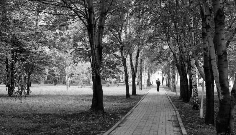 Ung man som går ner tomma Forest Path royaltyfri fotografi