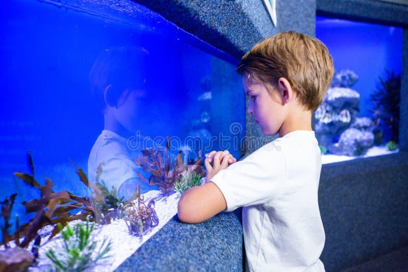 Ung man som ser alger i en behållare royaltyfri foto
