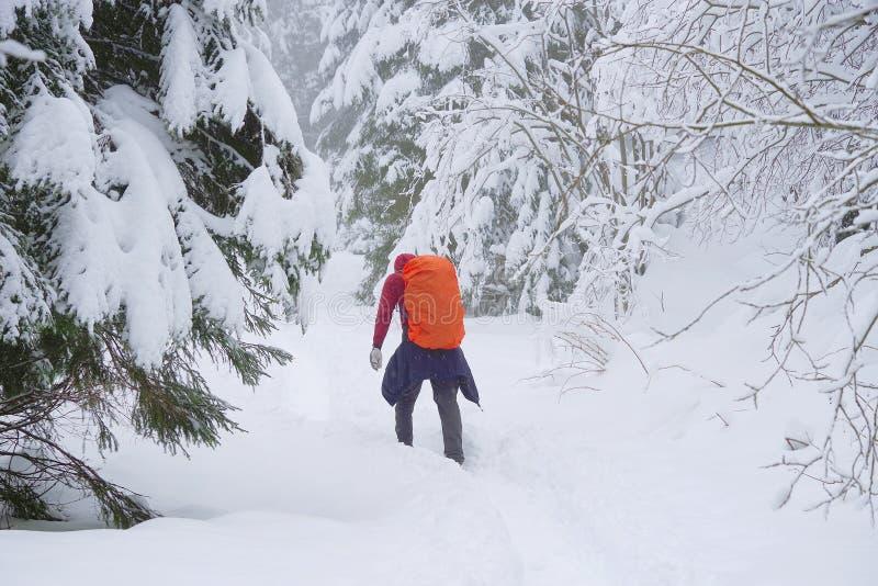 Ung man som trekking i villkor för hård vinter royaltyfri foto