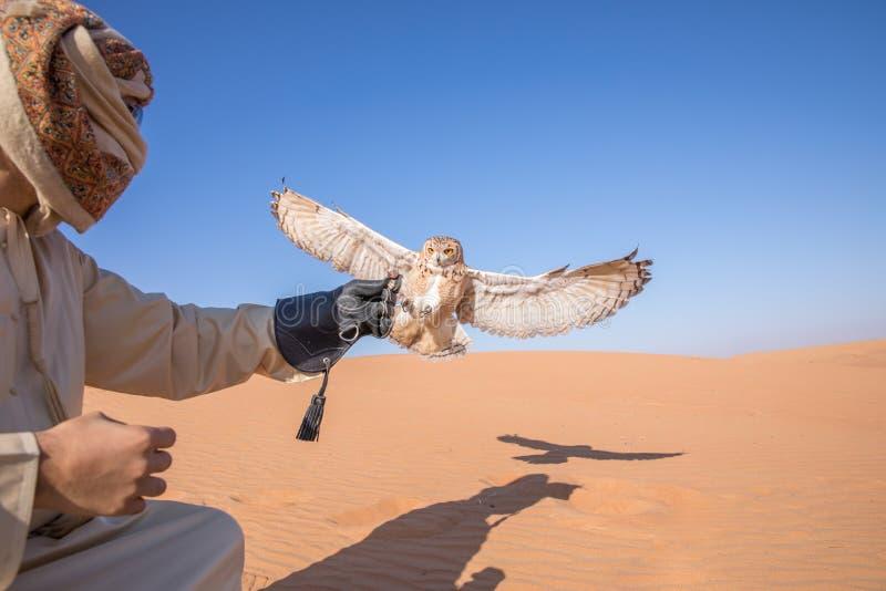 Ung manlig faraoörnuggla under en ökenfalkenerarkonstshow i Dubai, UAE arkivfoton