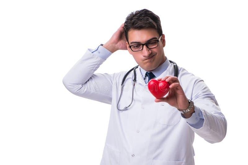 Ung manlig kardiologdoktor som rymmer en hjärta isolerad på vit royaltyfri fotografi