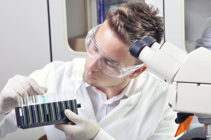 Ung medicinsk forskare som studerar den nya vikten eller viruset med mikroskopet arkivbilder