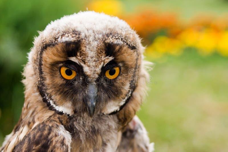 Ung owlstående royaltyfri foto