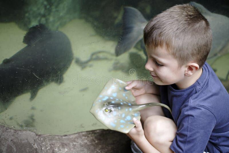Ung pojke på ett akvarium arkivbilder