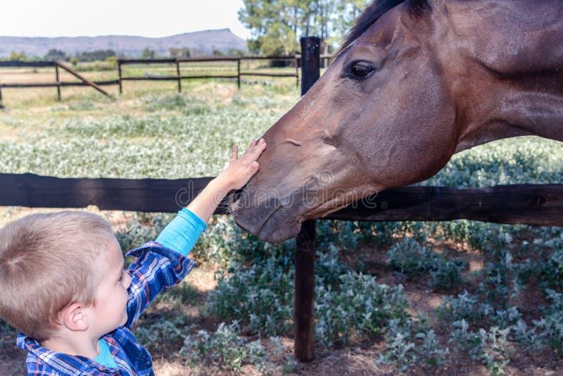 Ung pojke som smeker brunt slut för hästhuvud upp i paddock arkivfoto