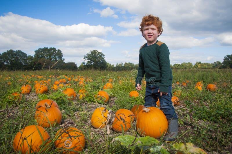 Ung pojke som väljer en pumpa arkivfoton