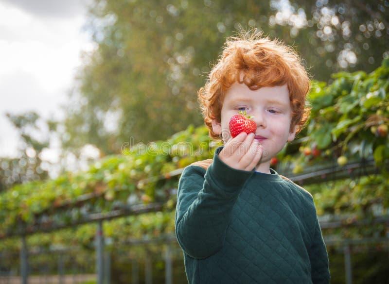 Ung pojkefruktplockning royaltyfri foto