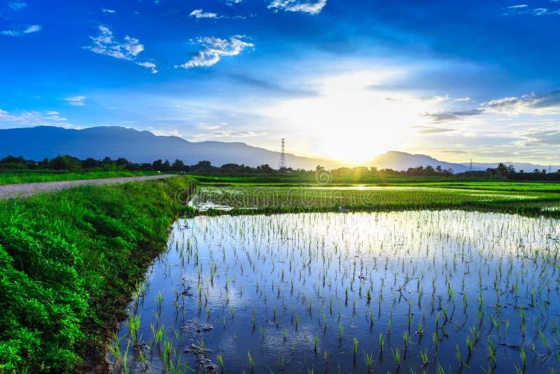 Ung risfält med bergsolnedgångbakgrund arkivfoton