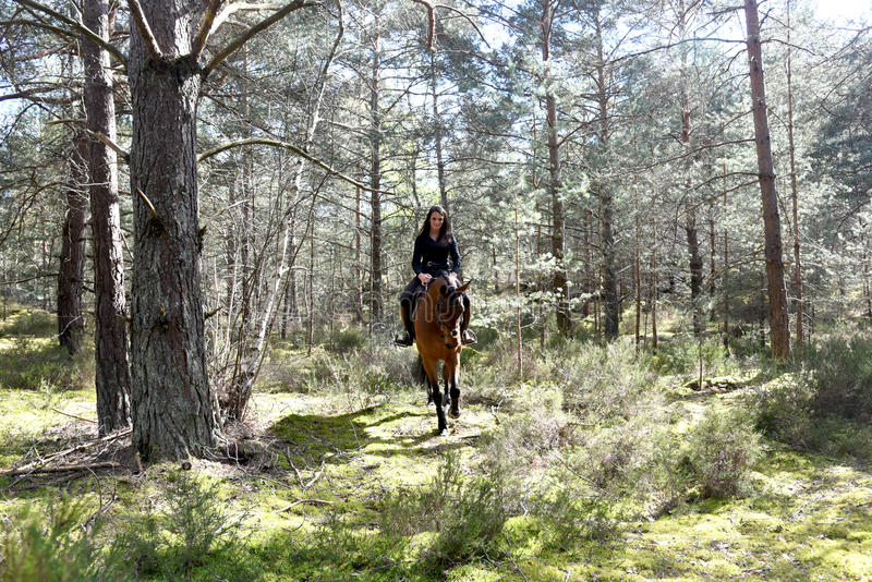 Ung ryttare i skog royaltyfria foton