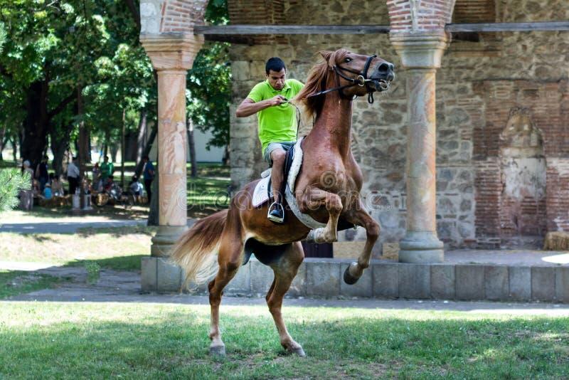 Ung ryttare på brun banhoppninghäst på äng royaltyfria bilder