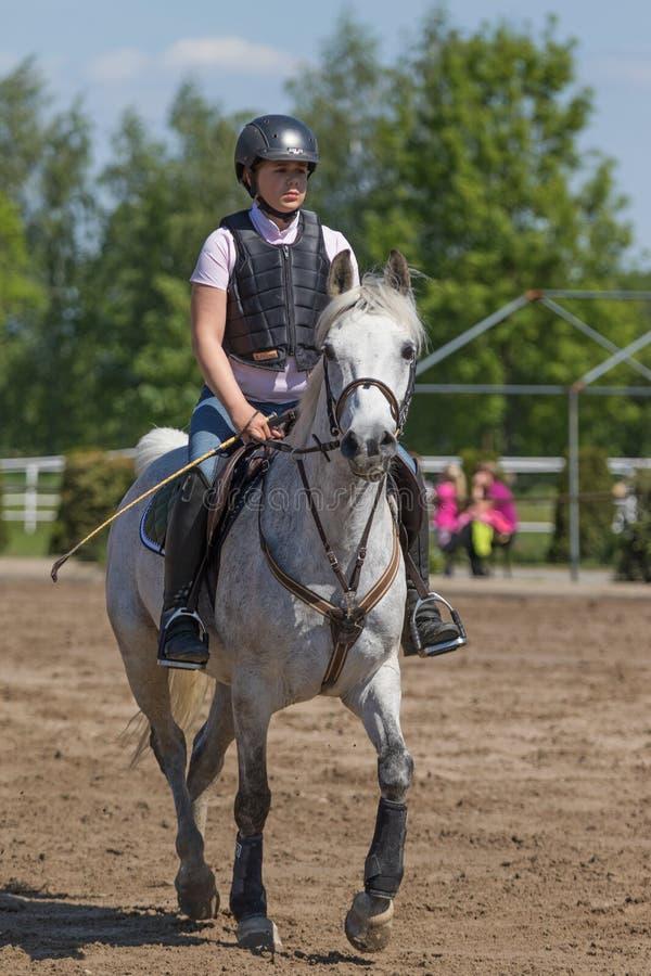 Ung skicklig ryttarinna på den vita hästen arkivbilder