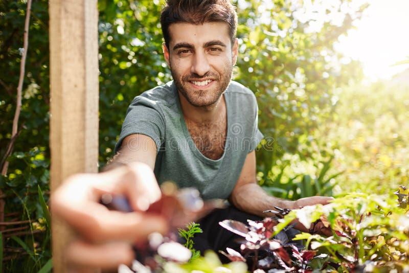 Ung snygg skäggig trädgårdsmästareutgifterdag i bygdgrönsakträdgård i sommarmorgon Attraktiv latinamerikan arkivbilder
