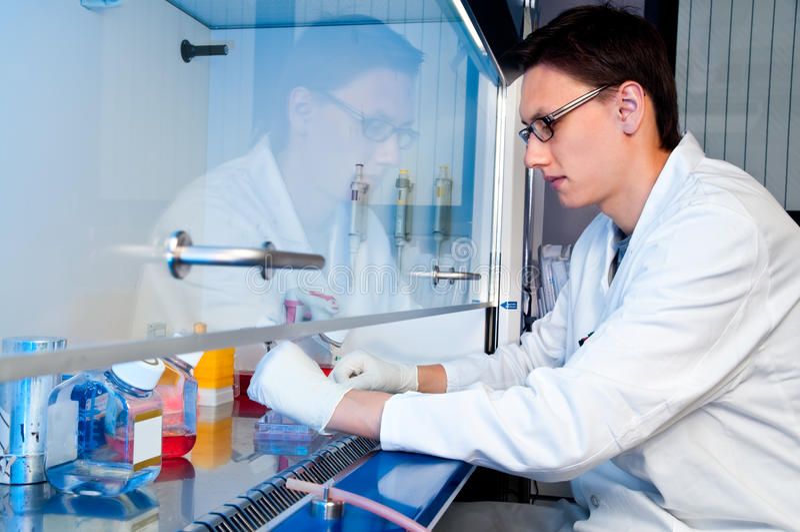 Ung tech fungerar med cellkultur arkivbild