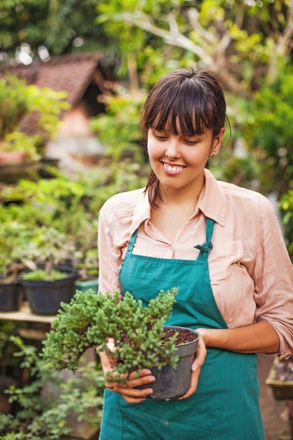 Ung trädgårdsmästare med bonsai arkivfoton