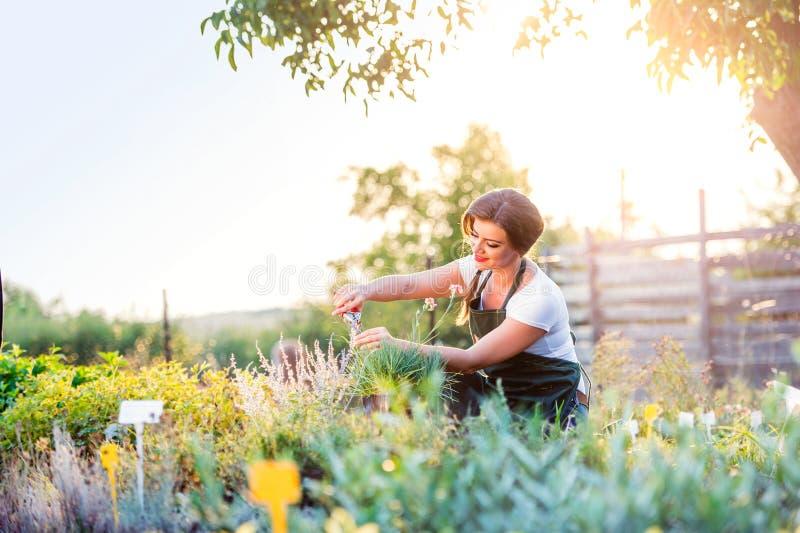 Ung trädgårdsmästare som klipper den lilla blommaväxten, grön solig natur fotografering för bildbyråer