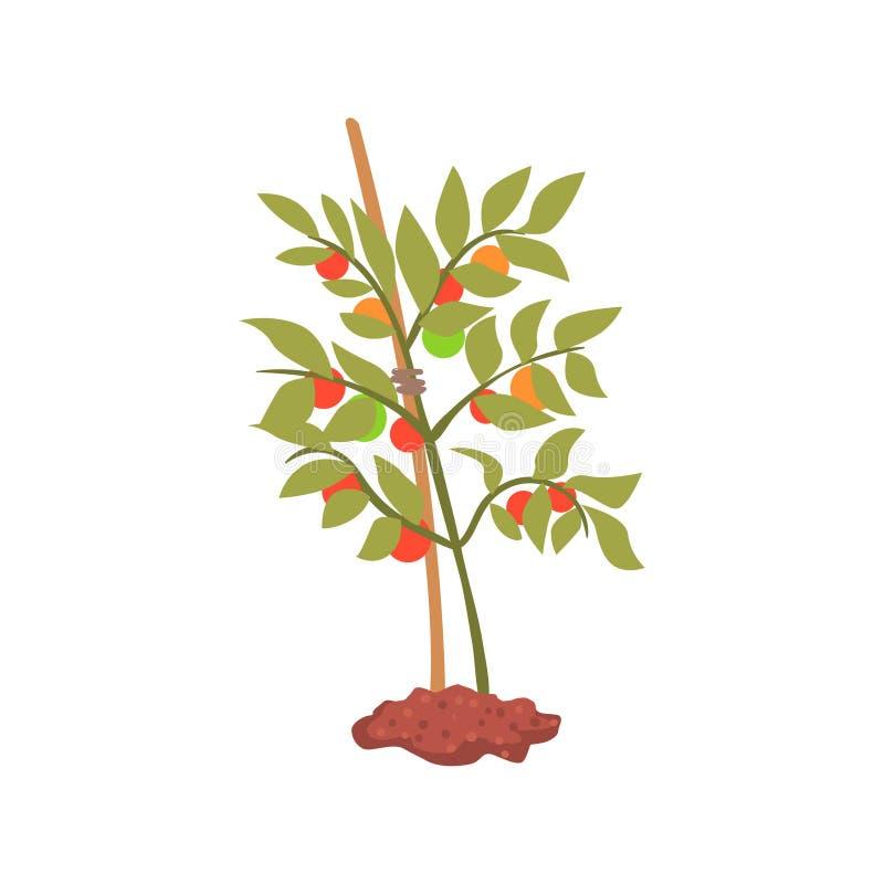 Ung trädväxt i jordtecknad filmvektorillustrationen royaltyfri illustrationer