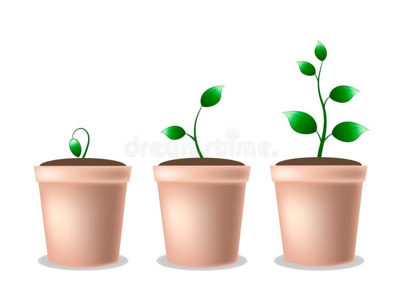 Ung växande växt i en kruka royaltyfri illustrationer