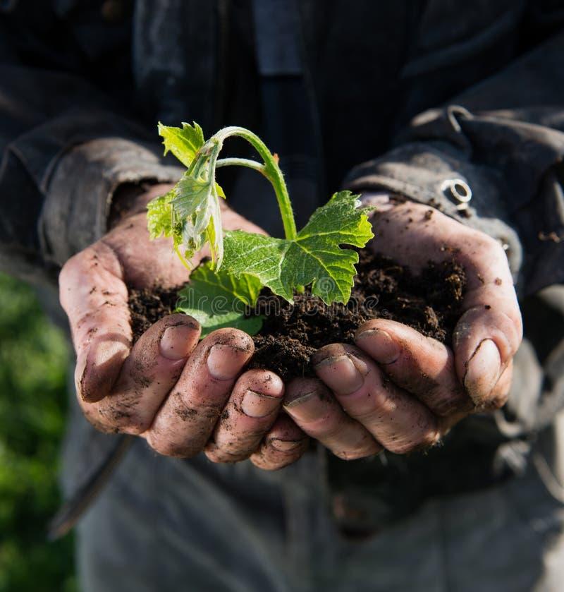 Ung växt för bondeinnehavgräsplan arkivfoto
