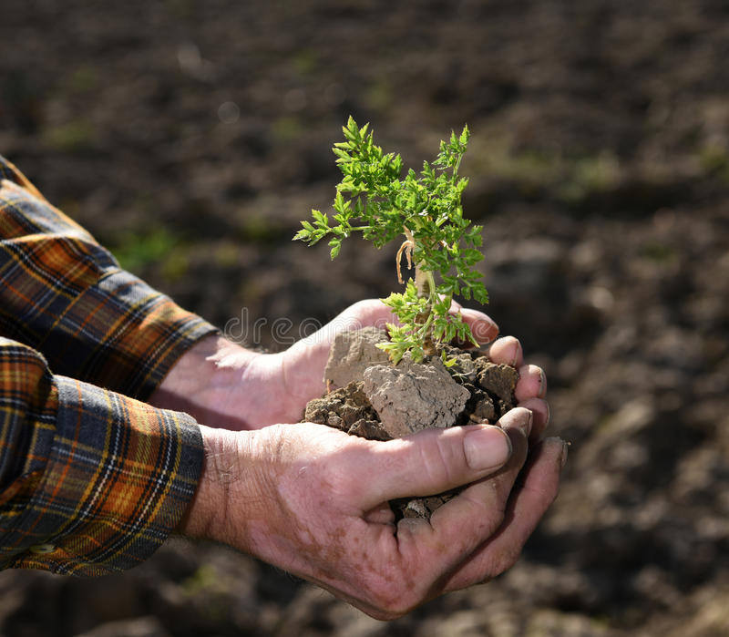 Ung växt för bondeinnehavgräsplan arkivbild