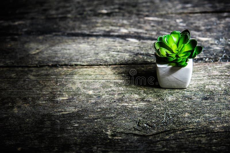 Ung växt i en blomkruka royaltyfri fotografi
