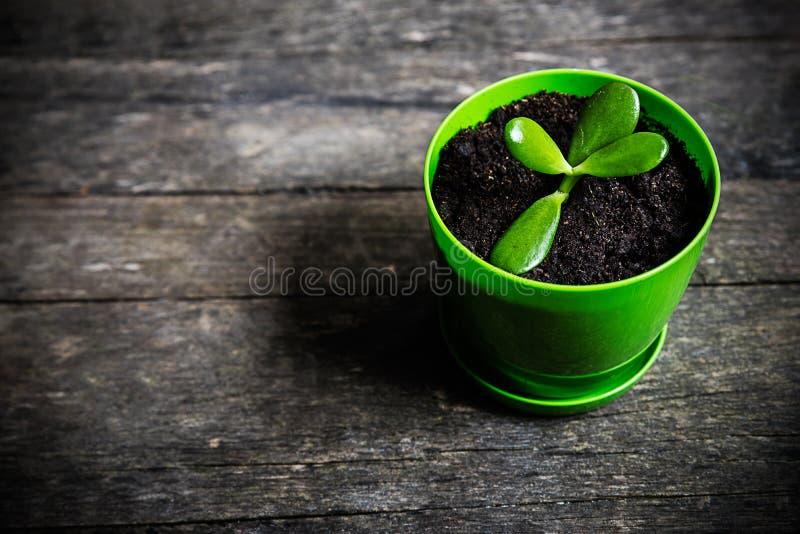 Ung växt i en blomkruka arkivfoto