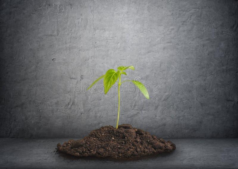 Ung växt i jord på bakgrunden av betongväggen arkivbild