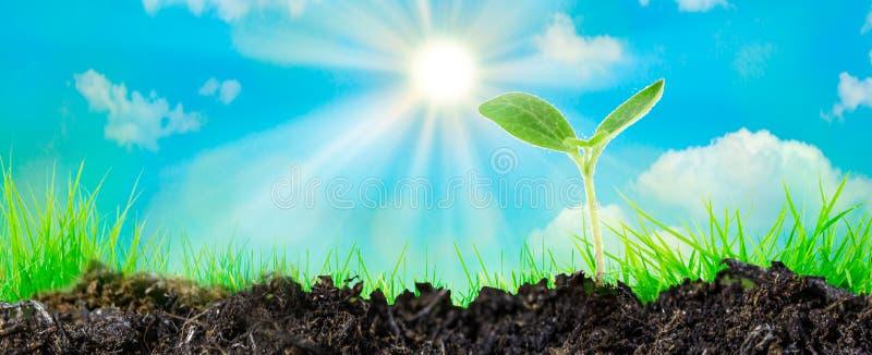Ung växt som växer i solljus Panorama- wiev, utrymme för text arkivfoton