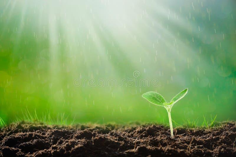 Ung växt som växer på jord i solljus fotografering för bildbyråer