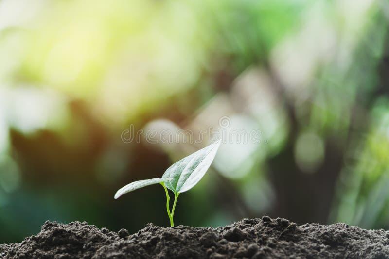 Ung v?xt f?r n?rbild som v?xer i naturen eller jordbruket f?r jordbegreppsr?ddning p? mjuk gr?n tr?dbakgrund royaltyfri bild