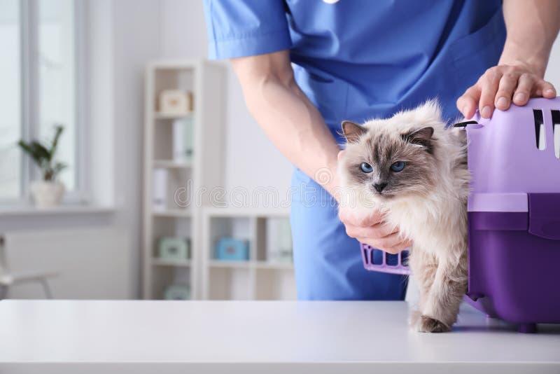 Ung veterinär med katten arkivfoton