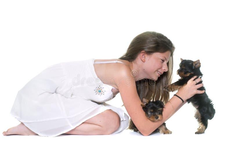 Ung yorkshire terrier och barn fotografering för bildbyråer