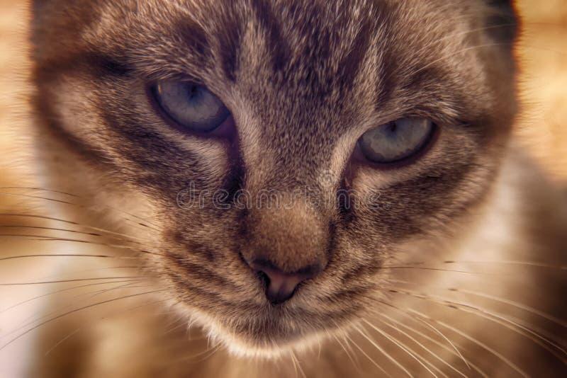 Unga Cat Eyes arkivbilder