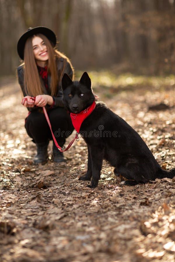 Unga flickan med en hund som går i hösten, parkerar Flickan har en härlig svart hatt royaltyfria foton