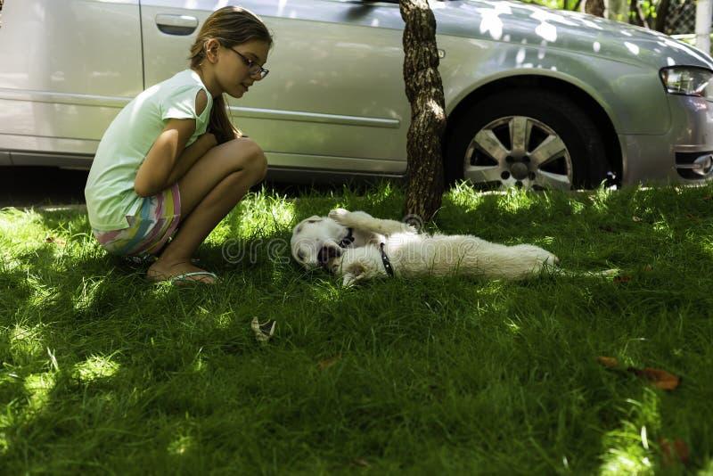 Unga flickan som håller ögonen på två vita valpar att spela på grönt gräs i ett utomhus-, parkerar arkivfoto