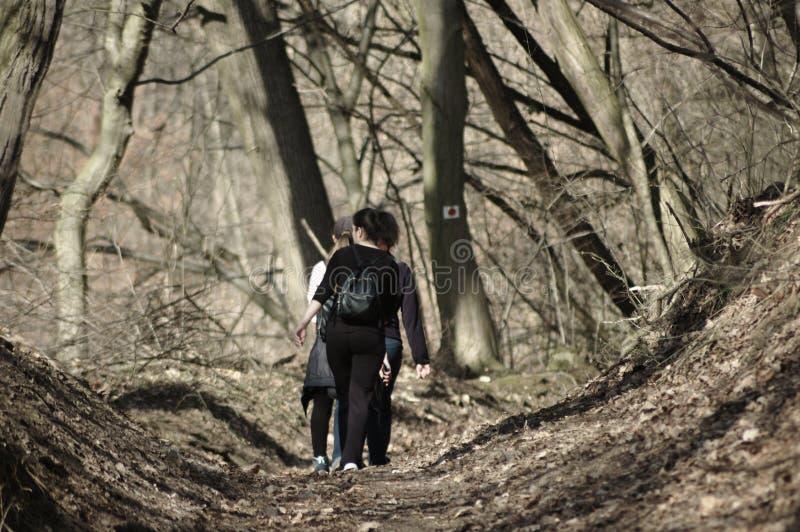 Unga flickor som går i en skog royaltyfri bild