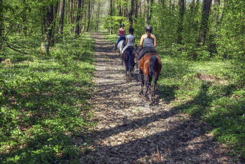 Unga flickor som rider på hästrygg till och med skogen arkivfoto